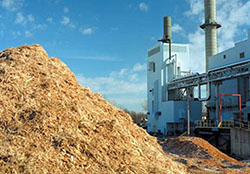 Invest in Biomass cogeneration plants